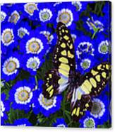 Yellow And Black Butterfly Canvas Print