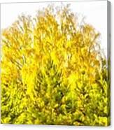 Yellow And Green Canvas Print