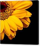 Yellow Gerbera Daisy Canvas Print