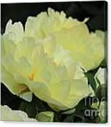 Yellow Peonies 1 Canvas Print
