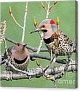 Yellow-shafted Northern Flickers Canvas Print