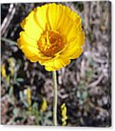 Yellow Wildflower Canvas Print