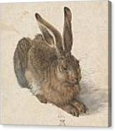 Young Hare Canvas Print
