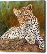 Young Leopard Canvas Print
