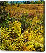 Cranberry Glades Botanical Area Canvas Print