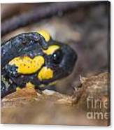 Fire Salamander Canvas Print
