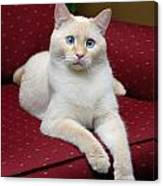 Flame Point Siamese Cat Canvas Print