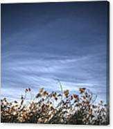 10 Foot High Grass Canvas Print