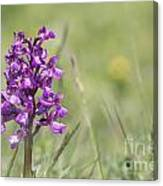 Green-winged Orchid Canvas Print