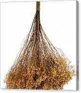 Hanging Dried Flowers Bunch Canvas Print