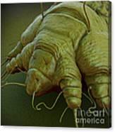 Scabies Mite Canvas Print