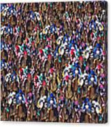 1000 Horses Canvas Print