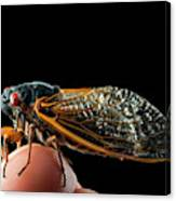 A Detailed View Of A Brood II Cicada Canvas Print
