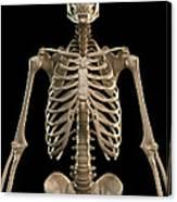 Bones Of The Upper Body Canvas Print
