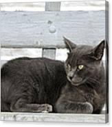 Cat In Hydra Island Canvas Print