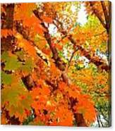 Fall Explosion Of Color Canvas Print