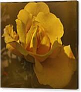 Vintage Yellow Rose Canvas Print