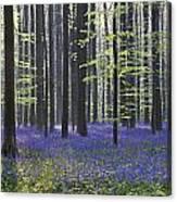 110506p237 Canvas Print