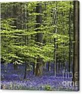 110506p248 Canvas Print