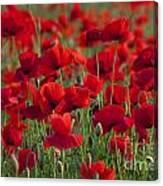 111216p031 Canvas Print