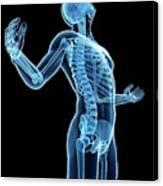 Human Skeletal System Canvas Print