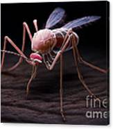 Anopheles Mosquito Canvas Print