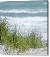 Dune Grass... Canvas Print
