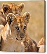 Lion With Cubs Canvas Print