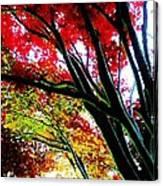 12032013003 Canvas Print