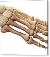 Foot Bones Canvas Print