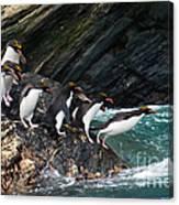Macaroni Penguin Canvas Print