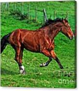 The Bay Horse  Canvas Print