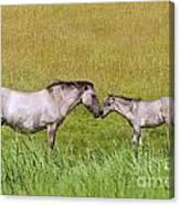 130201p027 Canvas Print