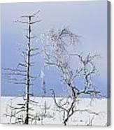 130201p331 Canvas Print