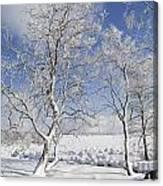 130201p335 Canvas Print