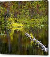 131005b-052 Forest Marsh 2 Canvas Print