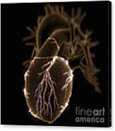 Coronary Blood Supply Canvas Print