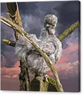 14. Cuckoo Bush Canvas Print