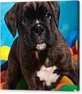 little Boxer dog puppy Canvas Print