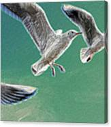 10760 Seagulls In Flight #001 Photo Painting Canvas Print