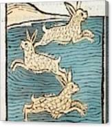1491 Sea Hares From Hortus Sanitatis Canvas Print