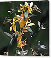 15 Hummingbirds Canvas Print