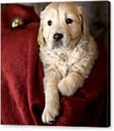 Golden Retriever Puppy Photograph by Angel Ciesniarska