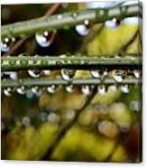 Raindrops On Bamboo Grass Canvas Print