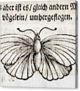 1683 Maria Merian Black Veined White Canvas Print