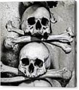 Human Bones. Canvas Print