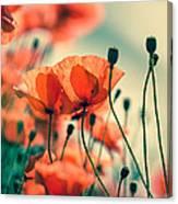 Poppy Meadow Canvas Print