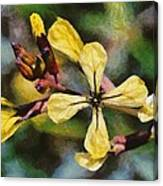 Spring Wild Flower Canvas Print