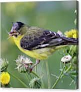 Birds Of The World Canvas Print