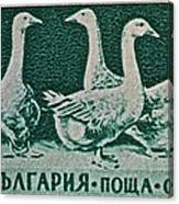 1955 Bulgarian Geese Stamp Canvas Print